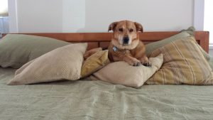 Epitaph for a Dog Aftertalk Grief Support