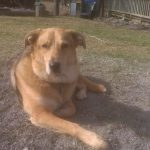 losing a dog AfterTalk Grief Support